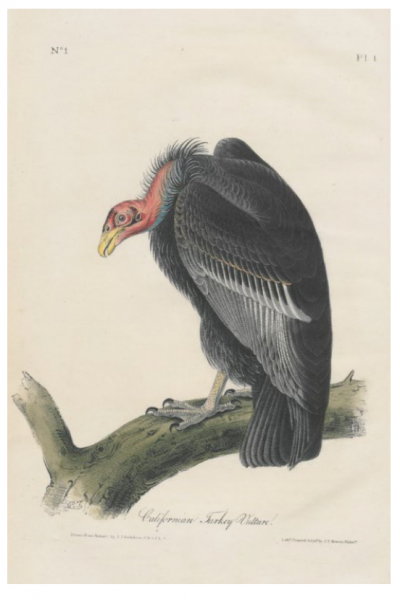 John James Audubon, The Birds of America from drawings made in the United States, printed in New York between 1840 and 1844 in 7 volumes