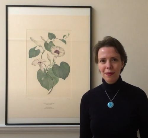 Video: Joseph Banks Florilegium